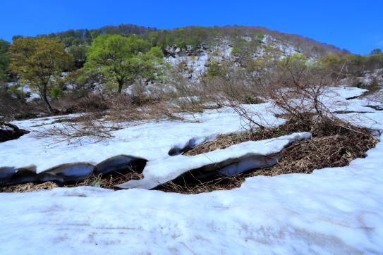 残雪と若葉の映える鍋倉山