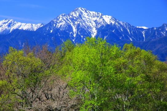 若葉と残雪の甲斐駒ヶ岳