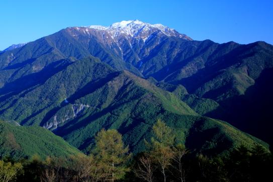 残雪と新緑の仙丈ヶ岳