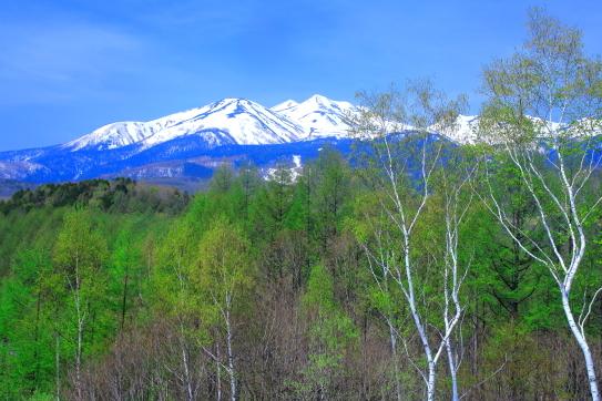 輝く新緑と残雪の乗鞍岳