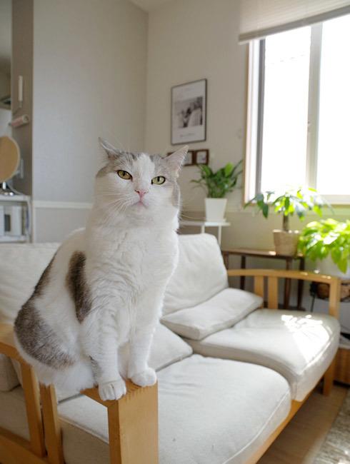 猫は耳で文句言う