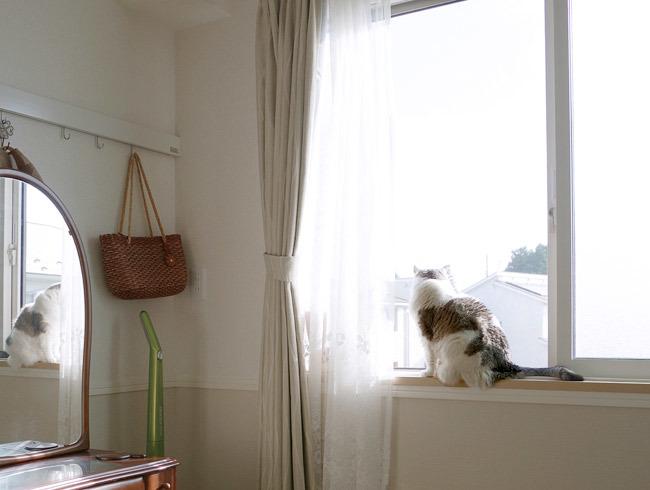 日向求めて猫を追う