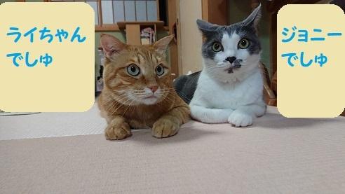 ライちゃんとジョニー