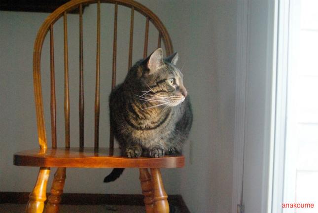 椅子から観察1