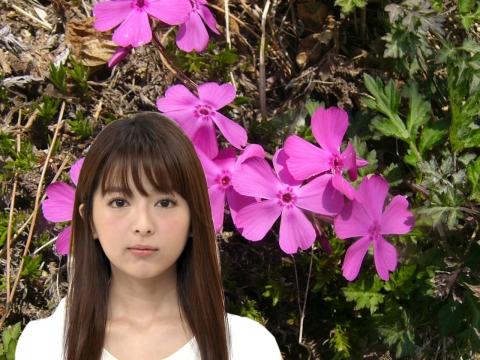 福田成美 芝桜