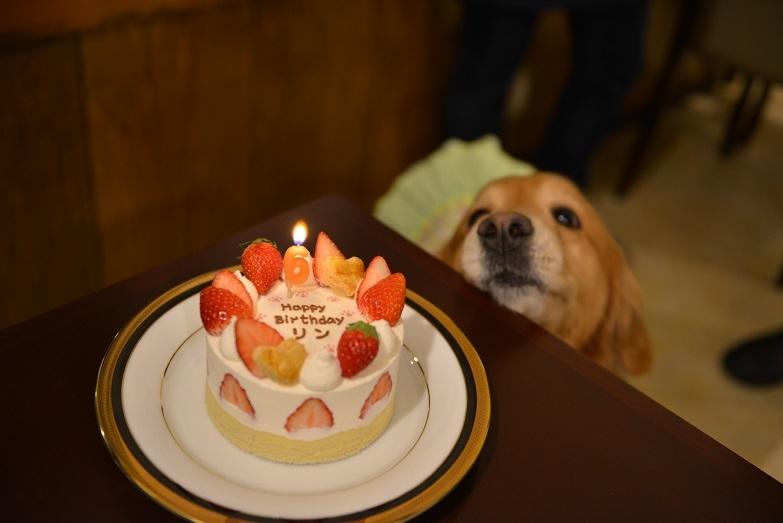 886 バースデーケーキ