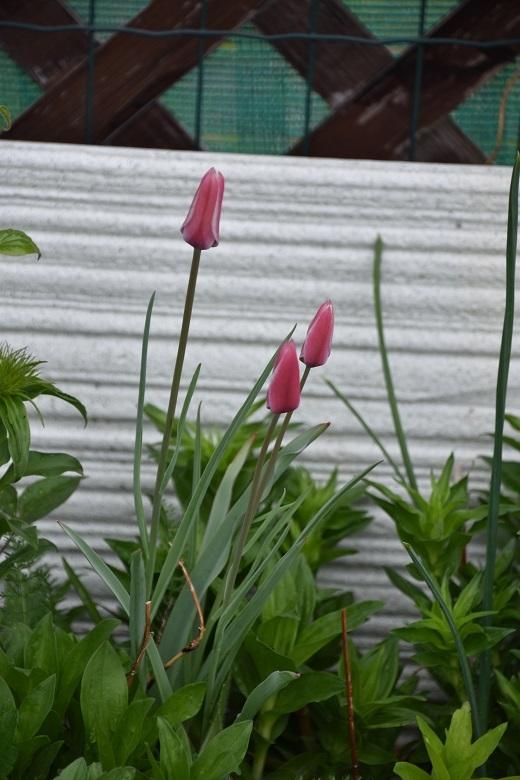 065 花壇