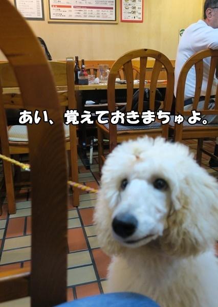 IMG_044620180509.jpg