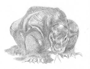 コモドドラゴン
