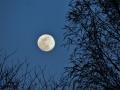 柳にほぼ満月