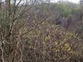 きぶしの森