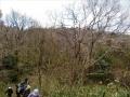 山桜の下を行く
