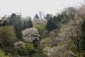 山桜と早緑