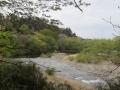 川沿いの緑