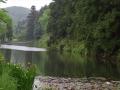 キショウブの長沼