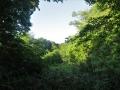 藪の真ん中
