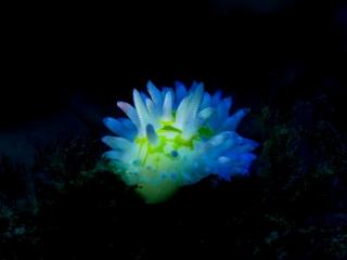 青フィルター_イガグリウミウミシ01