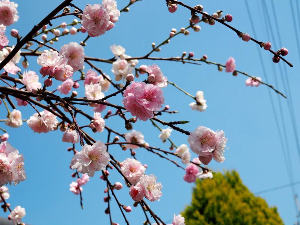 春の好きだった花