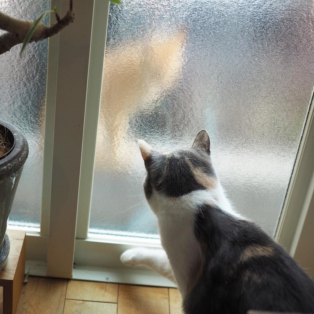 近所の猫さん