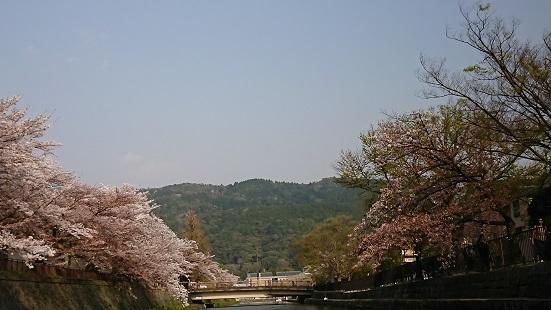180402京都桜