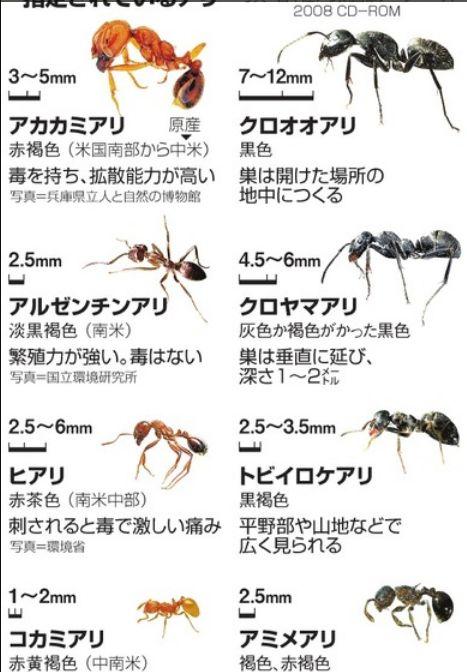 アリの種類