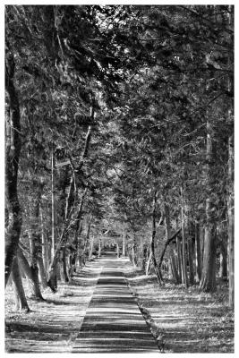 高知小村神社