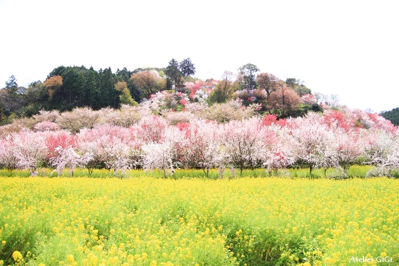 nishigawa-flowerpark-a.jpg