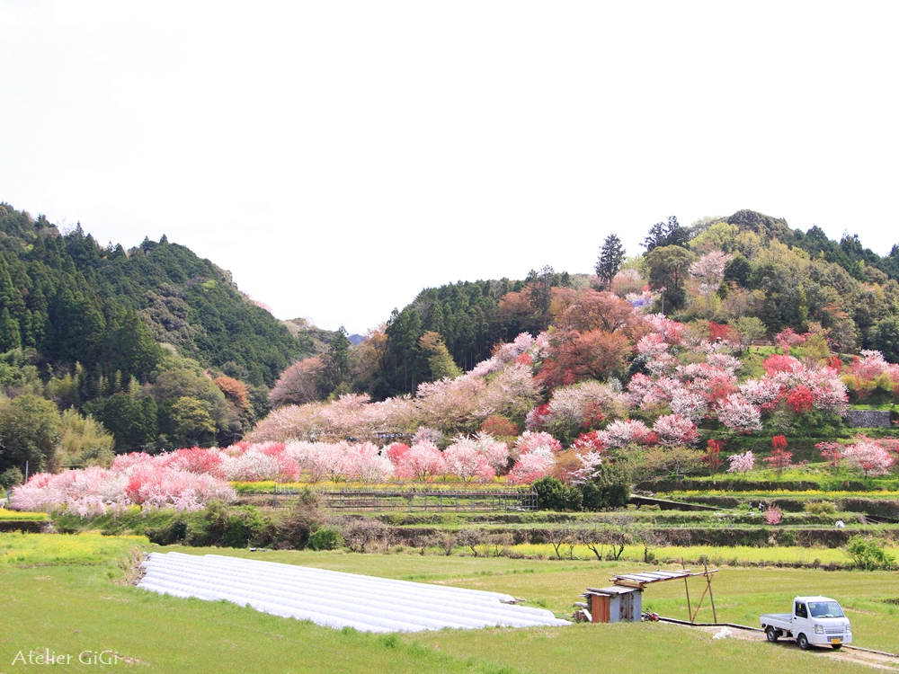 nishigawa-flowerpark-b.jpg