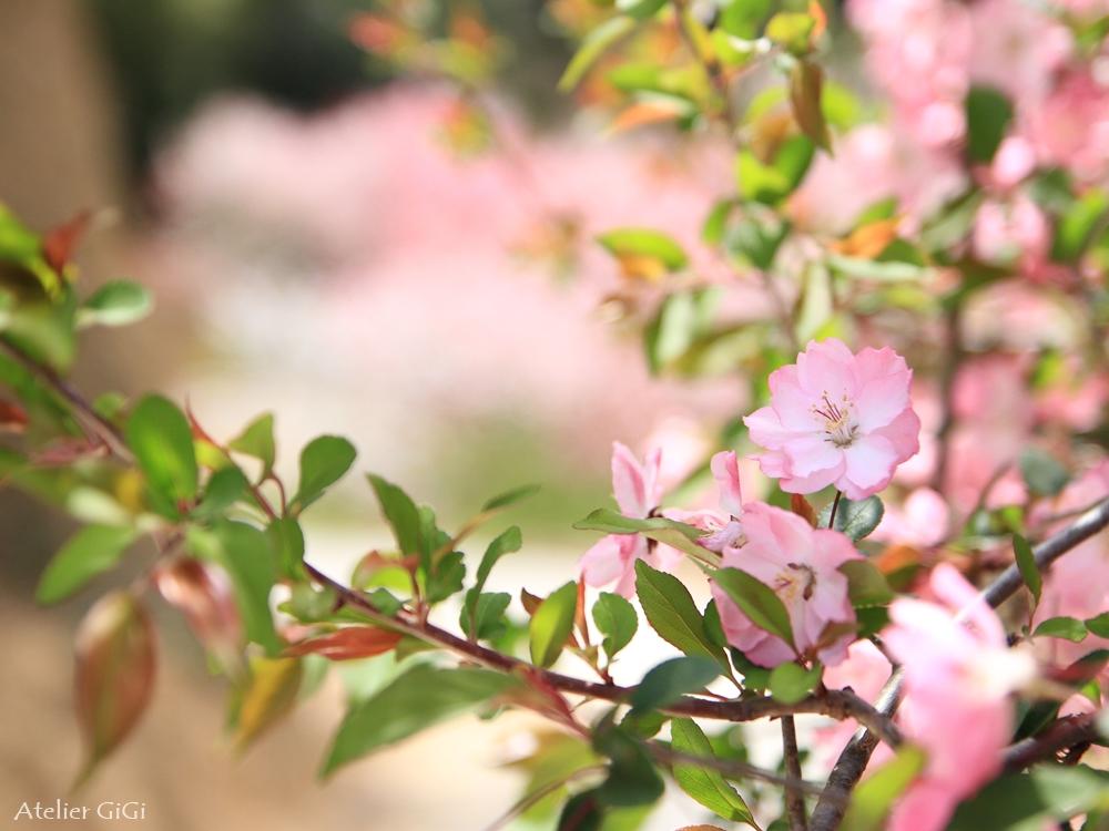 nishigawa-flowerpark-c.jpg