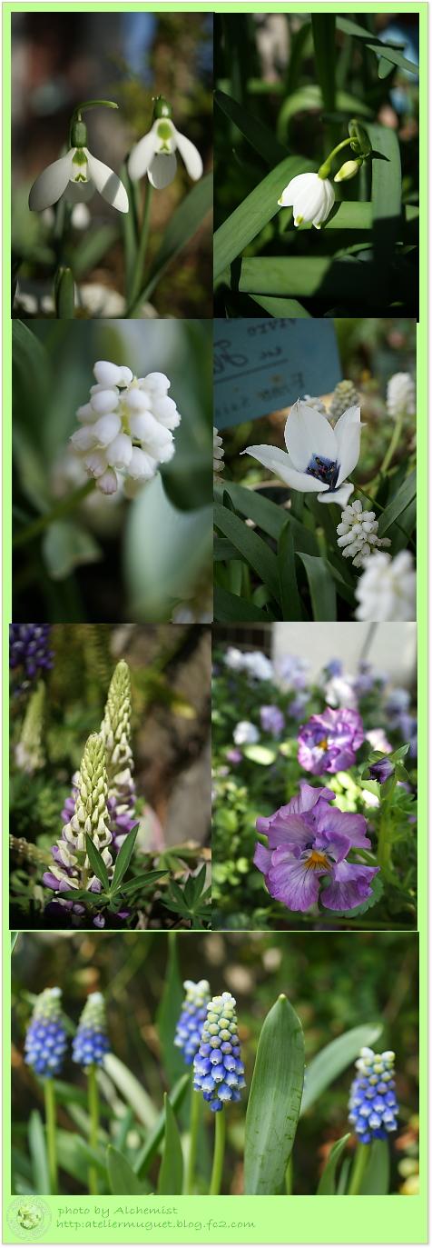 4g-spring.jpg