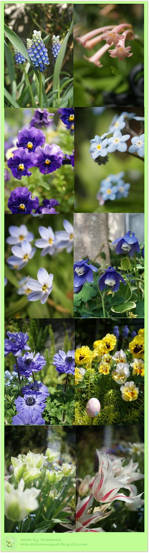 4g-spring1.jpg