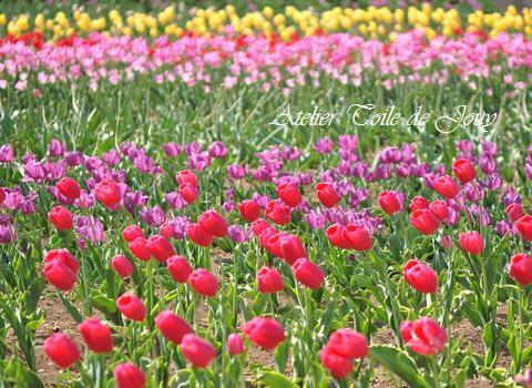 花オアシス