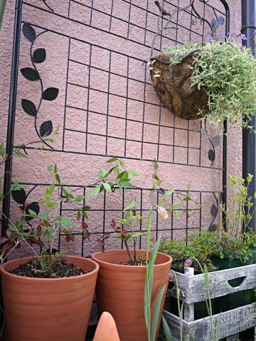 gardening410