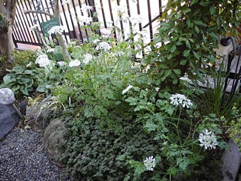 gardening420