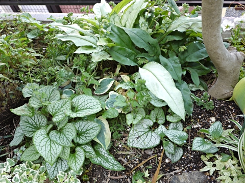 gardening421