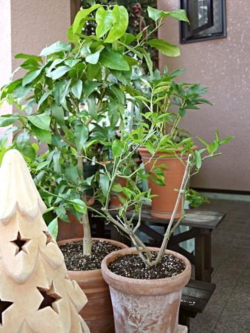 gardening424