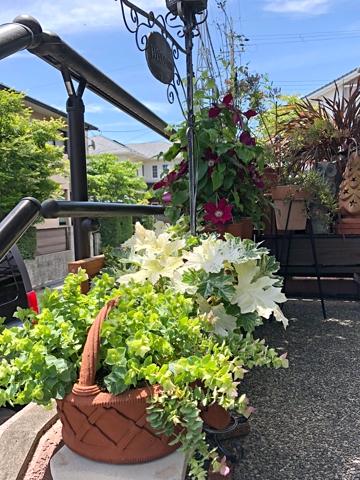 gardening426