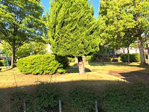gardening429