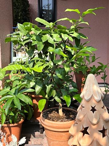 gardening430