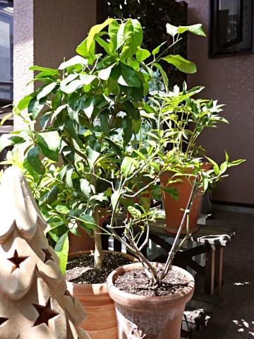 gardening432