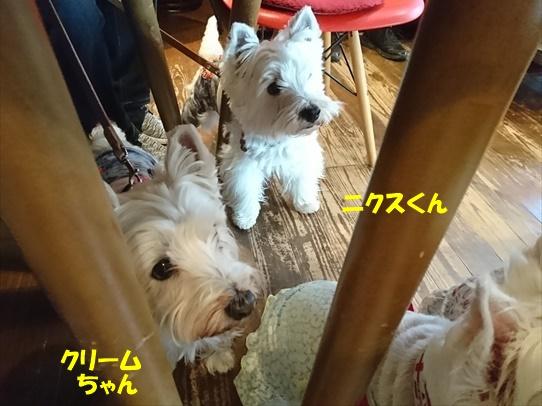 cafe7_20180530190609709.jpg