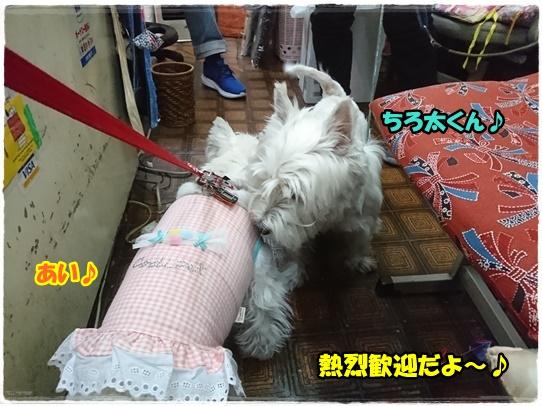 hinameguri3_2018040419041455b.jpg