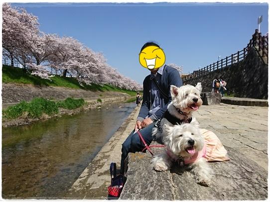 sahogawa14.jpg