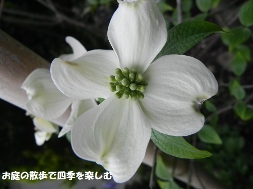 hanamizuki31_20180415082338ddc.jpg