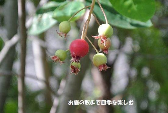 jyu-nberi-57.jpg