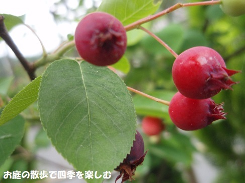 jyu-nberi-58.jpg