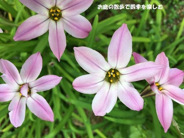 niwa241_20180401104849870.jpg
