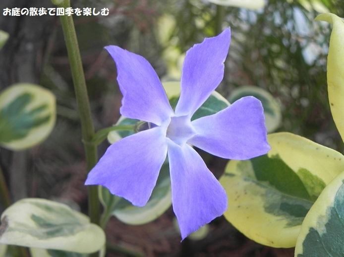 niwa327.jpg