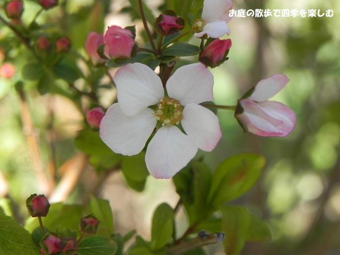 niwa328.jpg