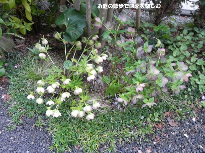 niwa331.jpg